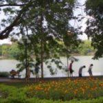 ベトナムのハノイの木陰
