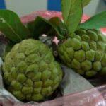 ベトナムでビタミンを摂取するなら東南アジアンなフルーツがおすすめ