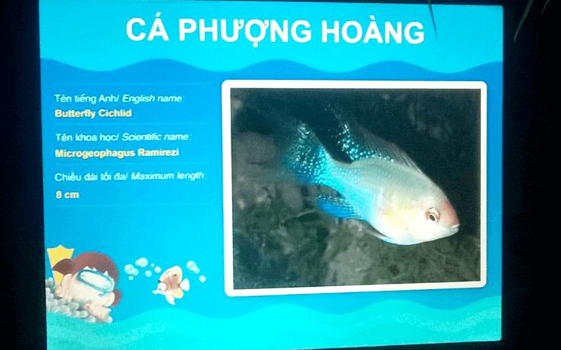 液晶に表示される魚の説明