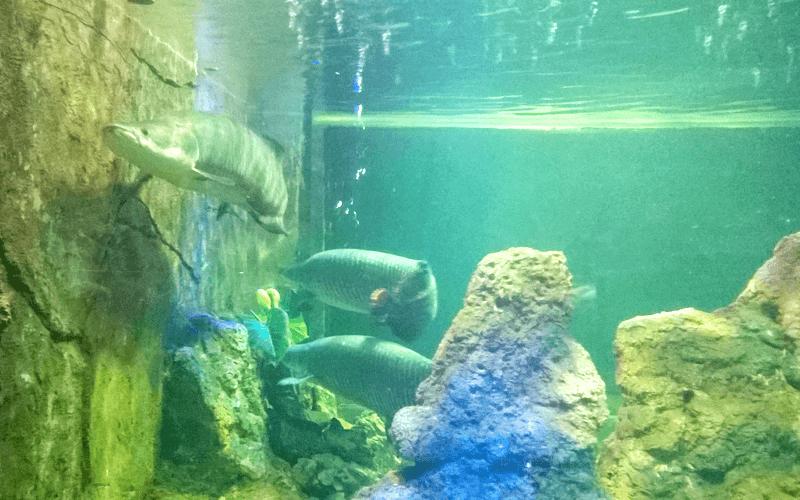 ハノイ水族館の魚たち