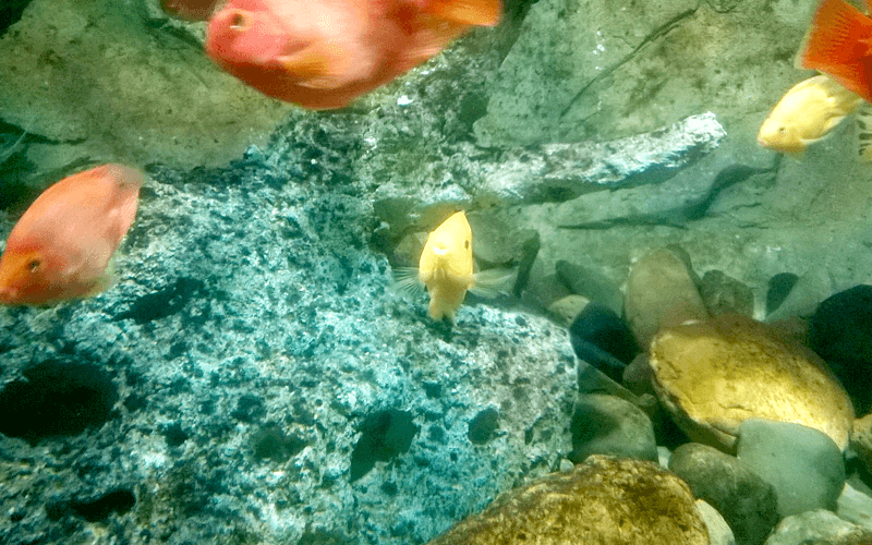 1匹だけ変な魚が。。