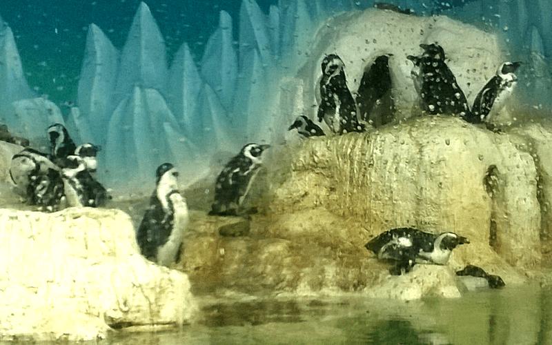 ハノイ水族館 ペンギン