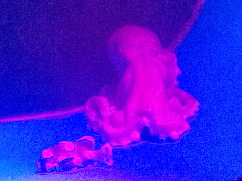 ハノイ水族館 タコ