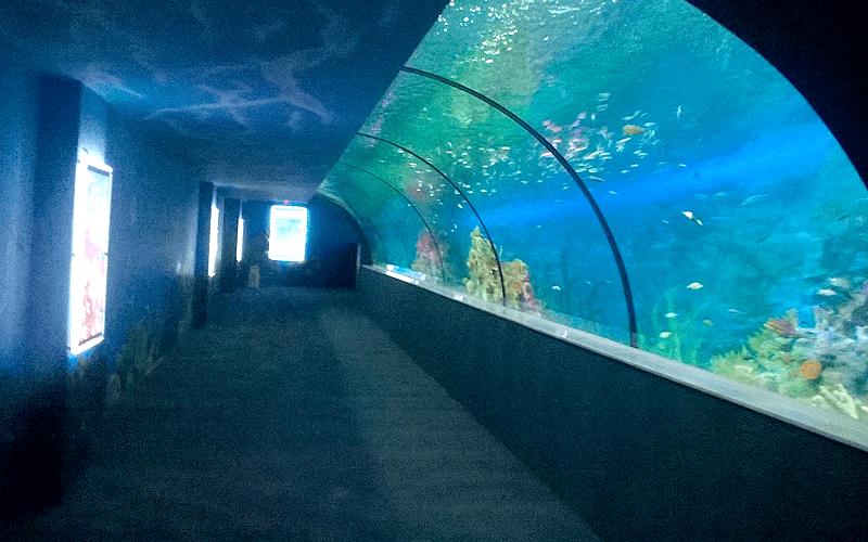 ハノイ水族館 ドーム型通路