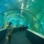 ベトナム最大級!ハノイの巨大水族館の料金とその実態!