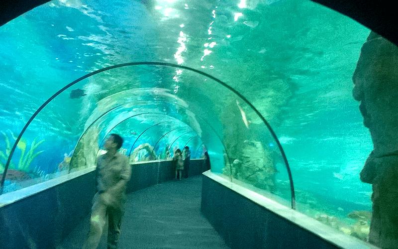 ハノイ水族館 ドーム