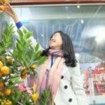 """ベトナムでの旧正月 """"テト"""" に飾る金柑の木。"""