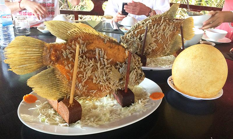 名物の像耳魚(エレファントイヤーフィッシュ)とお餅を20cm