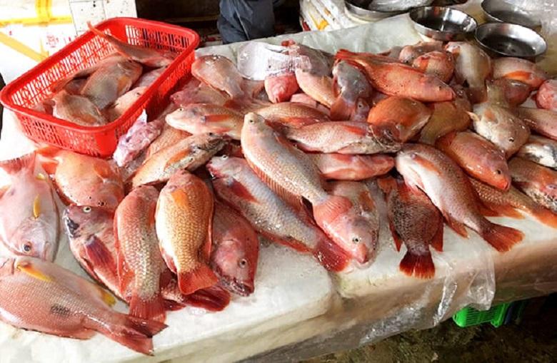 料理教室では使わないけどホイアン市場の新鮮な魚