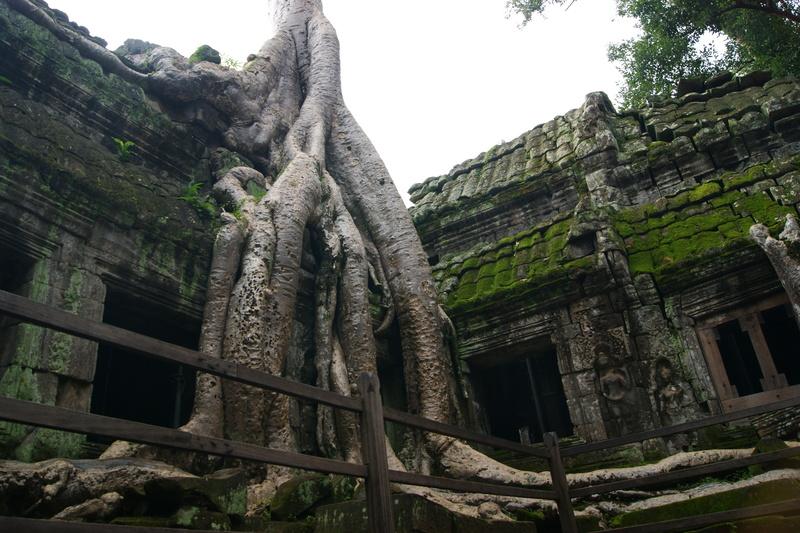 遺跡崩落の要因の一つは「根」