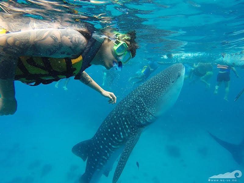ジンベイザメってどんなサメ?ジンベイザメツアーに参加する前に知っておきたい情報