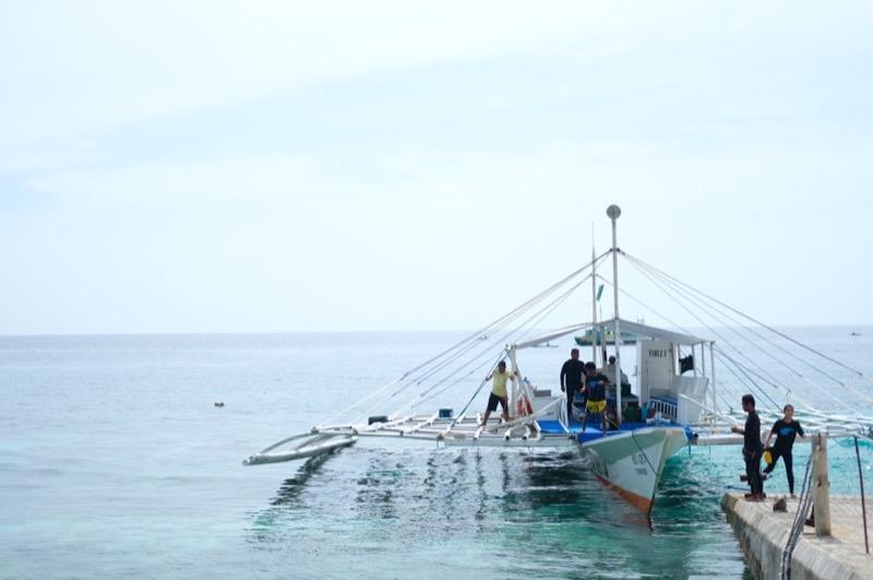 セブで一生の思い出を!『ジンベイザメと泳ぐ』ツアーがおすすめな理由!